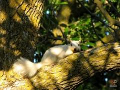 Squirrel_White01.jpg