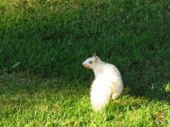 Squirrel_White04.jpg