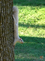 Squirrel_White02.jpg