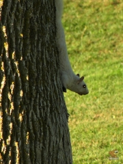 Squirrel_White03.jpg
