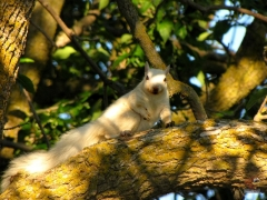 Squirrel_White06.jpg