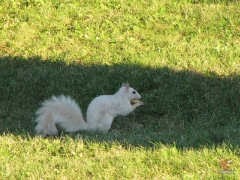 Squirrel_White09.jpg