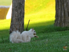 Squirrel_White11.jpg