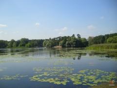 Озеро-с-кувшинками.jpg
