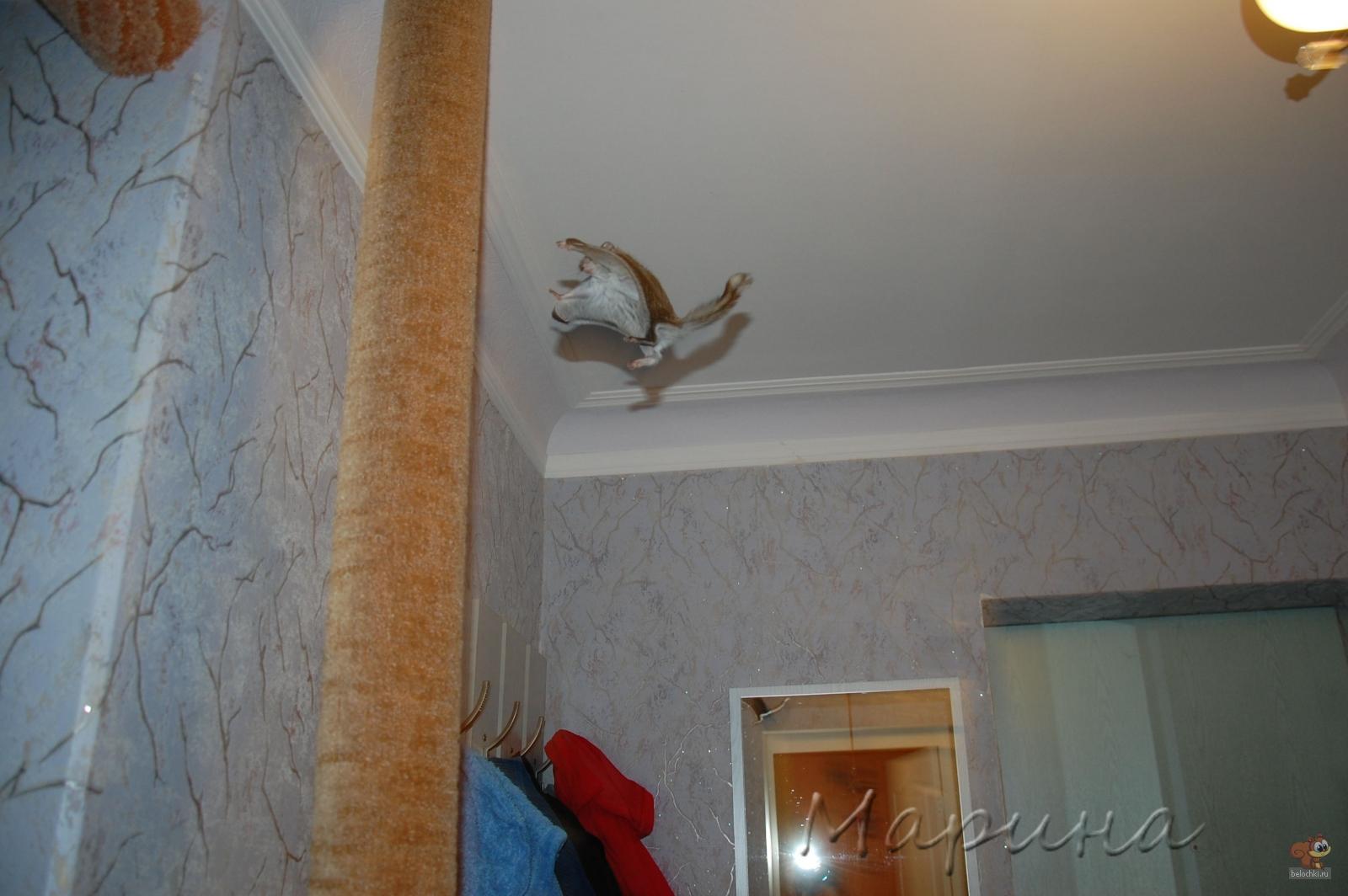 gallery_7524_284_15807.jpg