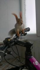 Кешуня-велосипедёр ☺