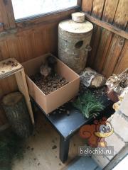 Рыжик в коробке с шишками :)