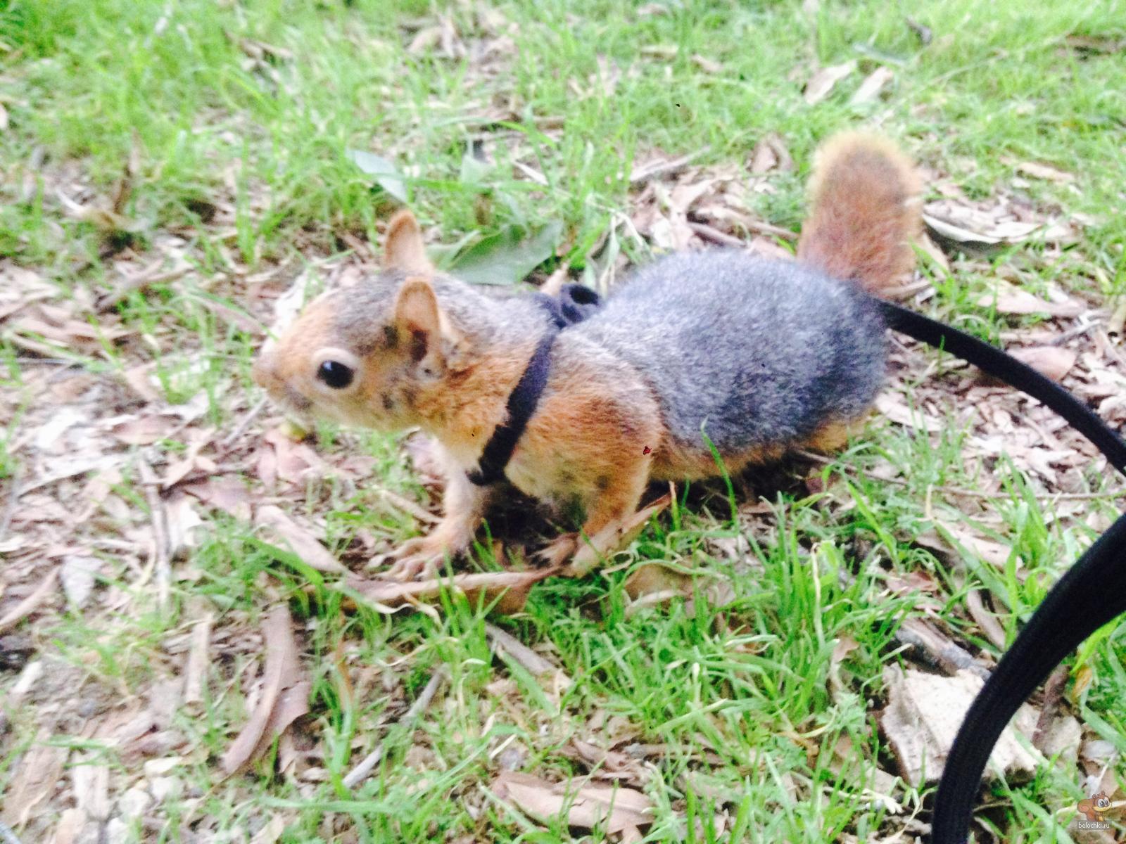 Милли впервые гуляет на травке.