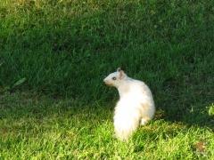 Squirrel_White04.jpg