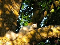 Squirrel_White05.jpg