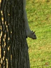 Squirrel_White03.jpg