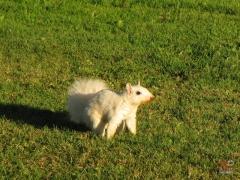 Squirrel_White07.jpg