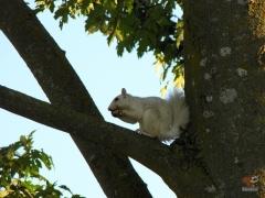 Squirrel_White08.jpg