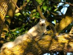 Squirrel_White06.jpg