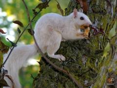Squirrel_White10.jpg