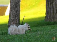 Squirrel_White11.jpg