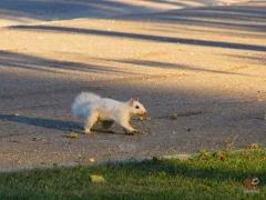 Squirrel_White12.jpg