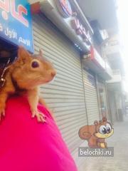 Килли идет с мамой за покупками
